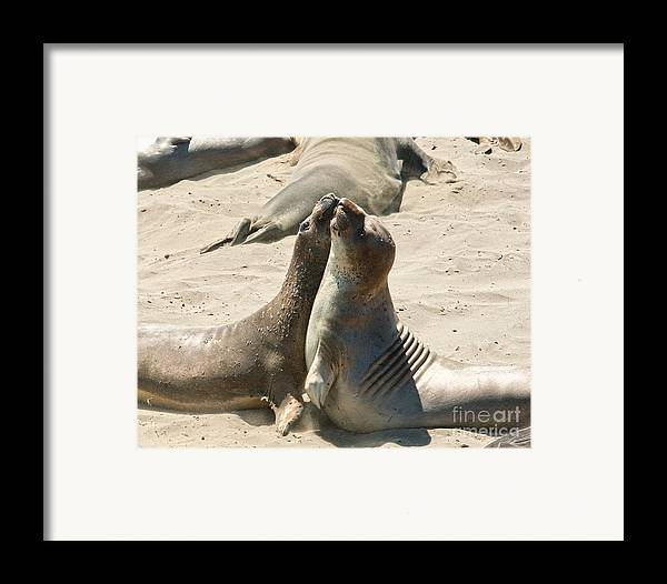 Sea Lions Framed Print featuring the photograph Sea Lion Love From The Book My Ocean by Artist and Photographer Laura Wrede
