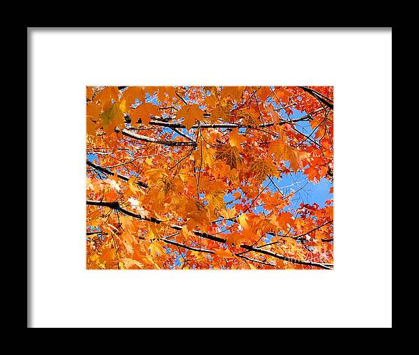 Leaves Framed Print featuring the photograph Sea Of Orange And Blue by Elizabeth Dow