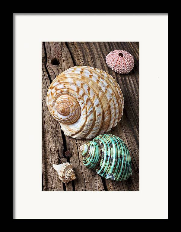 Sea Shell Framed Print featuring the photograph Sea Shells With Urchin by Garry Gay