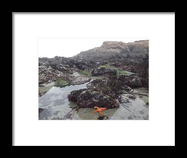 Framed Print featuring the photograph Sea Star by Randy Esson