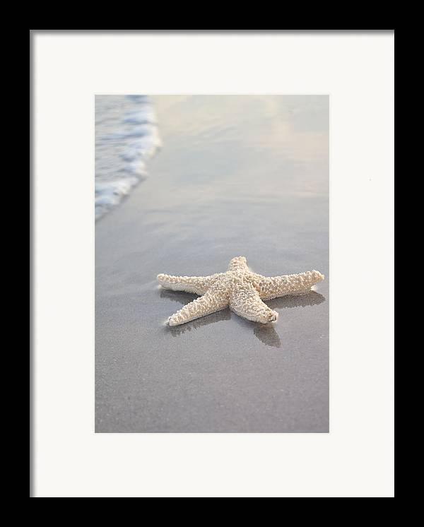 Beach Framed Print featuring the photograph Sea Star by Samantha Leonetti