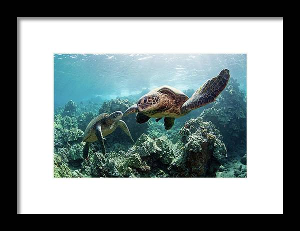 Underwater Framed Print featuring the photograph Sea Turtles by M Swiet Productions