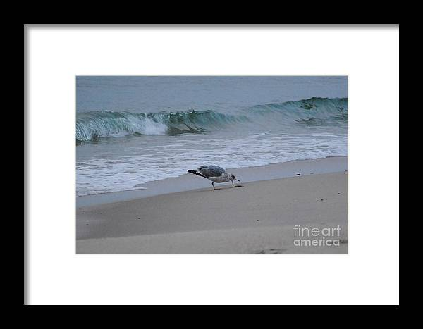 Seagull & Starfish Seaside Heights Beach Jersey Shore Framed Print featuring the photograph Seagull And Starfish by Daniel Diaz
