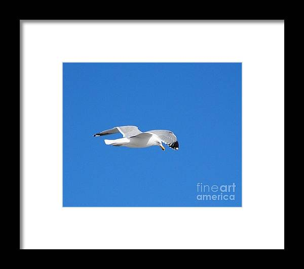 Seagull Seaside Heights Beach Jersey Shore Framed Print featuring the photograph Seagull Patrol by Daniel Diaz