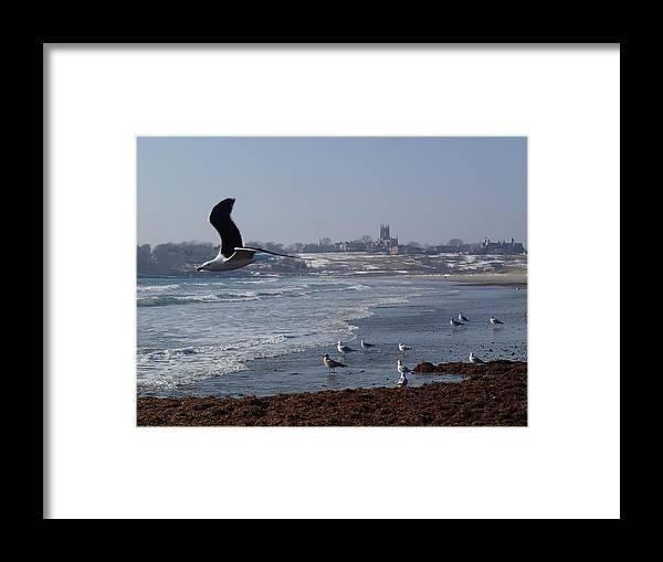 Seagull Framed Print featuring the photograph Seagull by Robert Nickologianis