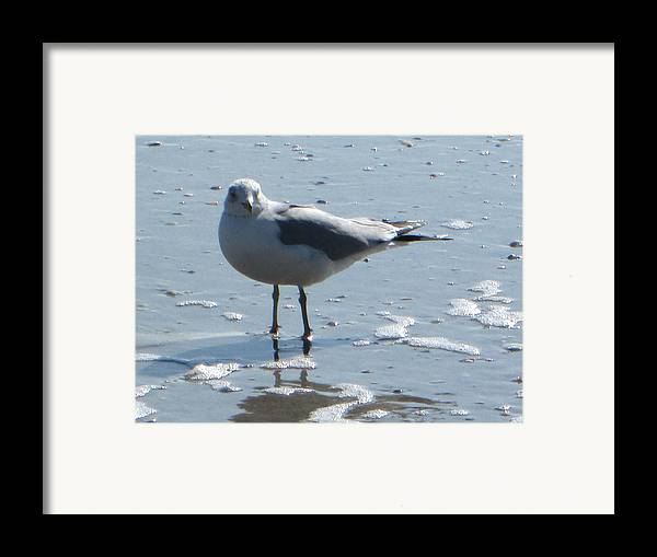 Seagull Framed Print featuring the photograph Seagull by Silvie Kendall