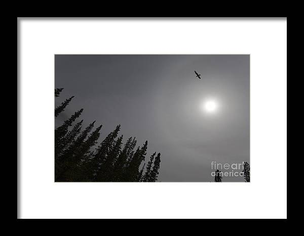 Animal Framed Print featuring the photograph Seagull Sun And Tree Tops by Stephan Pietzko