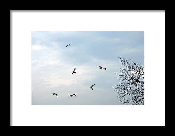 Seagull Framed Print featuring the photograph Seagulls Above by Linda Kerkau