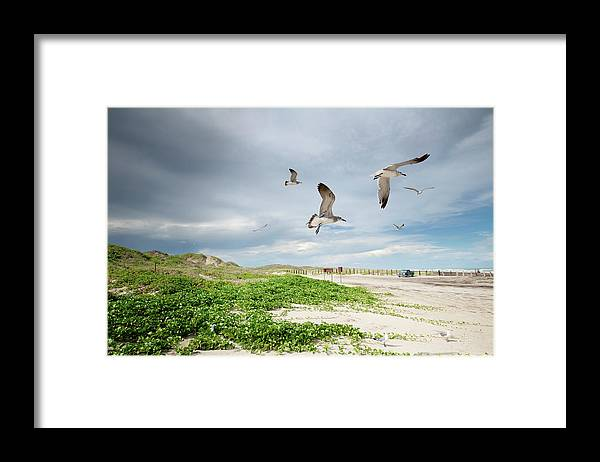 Scenics Framed Print featuring the photograph Seagulls In Flight At North Padre by Olga Melhiser Photography