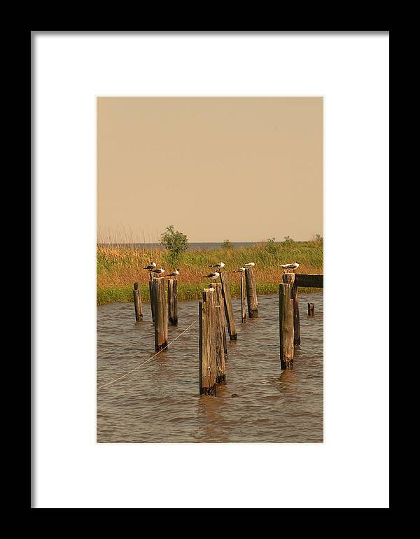 Seagulls Framed Print featuring the photograph Seagulls by Ronald Olivier