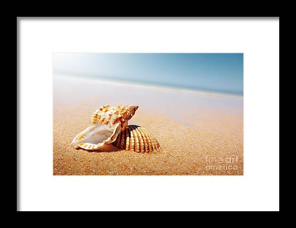 Abstract Framed Print featuring the photograph Seashell And Conch by Carlos Caetano
