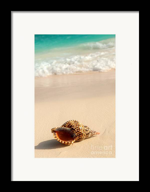 Seashell Framed Print featuring the photograph Seashell And Ocean Wave by Elena Elisseeva
