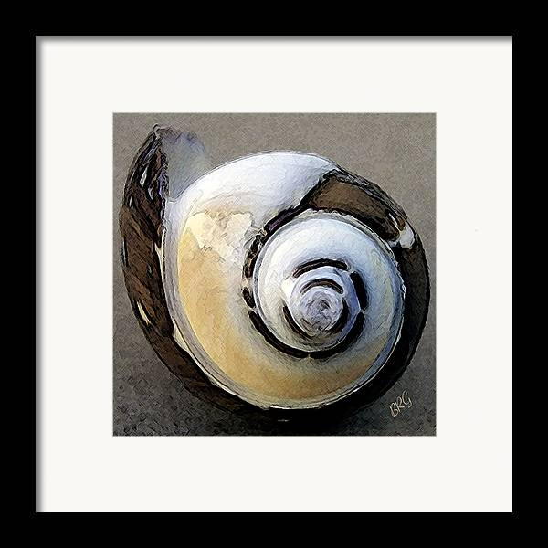 Seashell Framed Print featuring the photograph Seashells Spectacular No 3 by Ben and Raisa Gertsberg