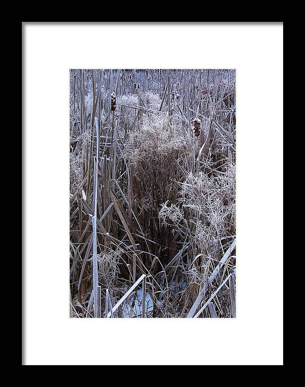 Hudson Valley Framed Print featuring the photograph Seasonal Stand Of A Marsh by Terrance DePietro