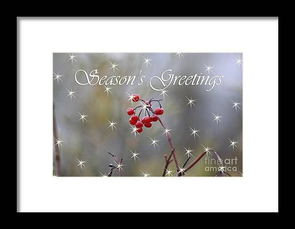 Christmas Cards Framed Print featuring the photograph Seasons Greetings Red Berries by Cathy Beharriell
