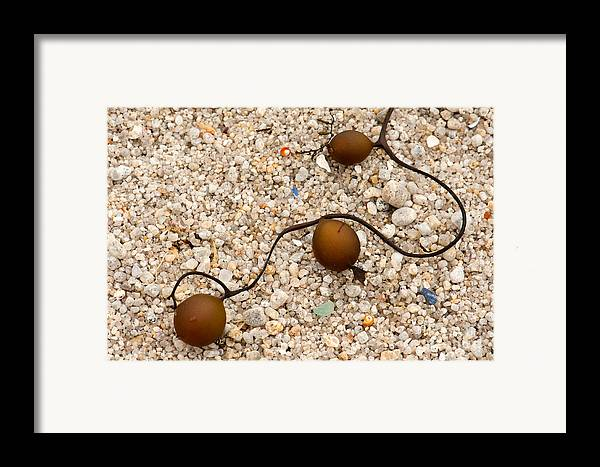 Seaweed Framed Print featuring the photograph Seaweed And Sand - Jewels Of The Ocean by Artist and Photographer Laura Wrede