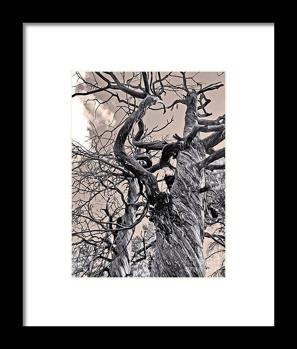 Sedona Arizona Framed Print featuring the photograph Sedona Arizona Ghost Tree In Black And White by Gregory Dyer
