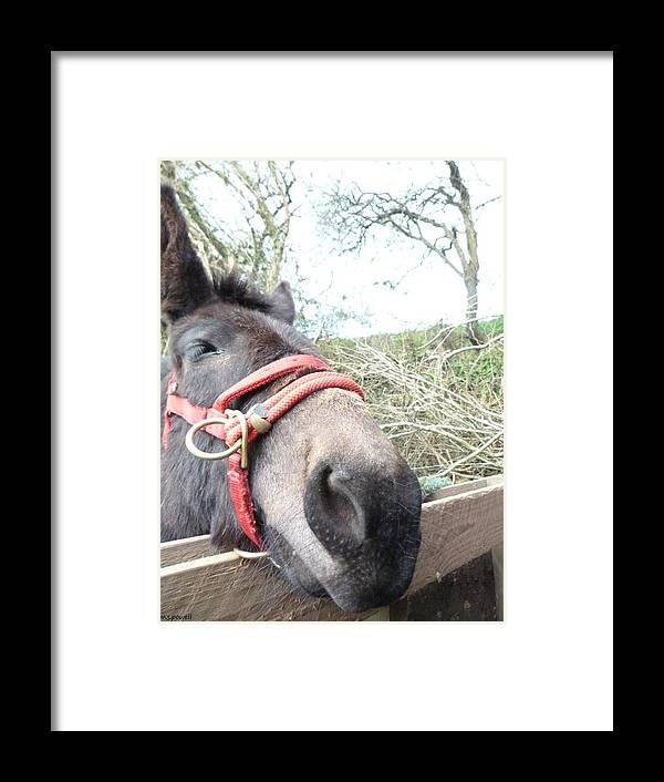 Mule Framed Print featuring the photograph See My Ears by Miah Powell