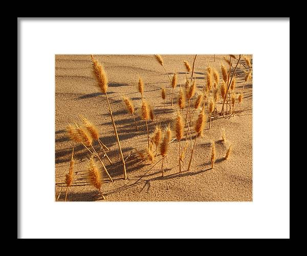 Brazos River Framed Print featuring the photograph Seed and sand by Andrew McInnes