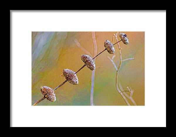 Seed Pod Framed Print featuring the photograph Seed Pod Pagoda by Gary Holmes