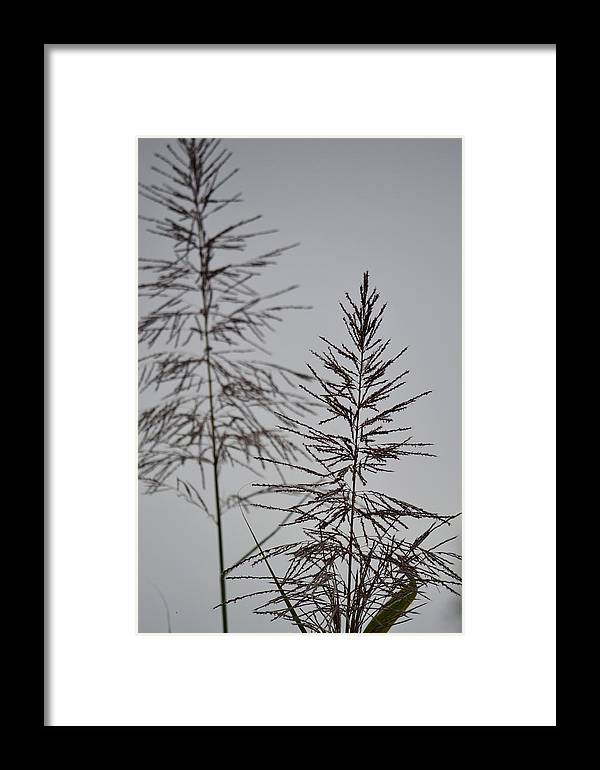 Nature Framed Print featuring the photograph Seed Tops by GK Hebert Photography