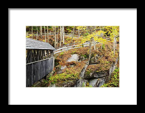 Sentinel Pine Framed Print featuring the photograph Sentinel Pine Hillside by Luke Moore