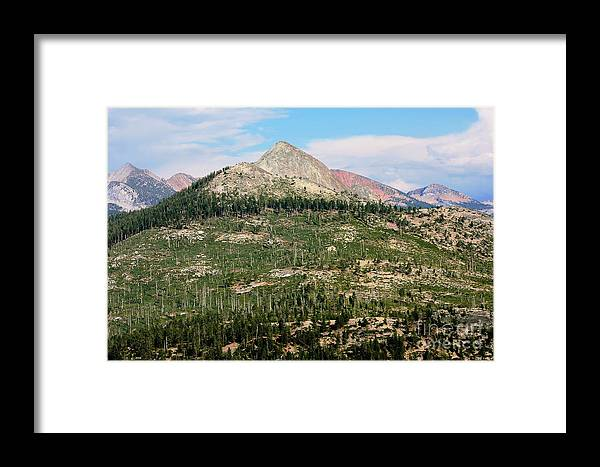 National Park Framed Print featuring the photograph Sequoi National Park by Sophie Vigneault