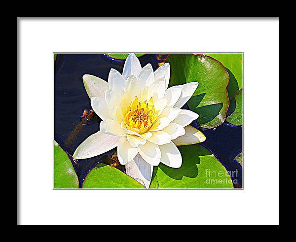 Waterlily Framed Print featuring the photograph Serenity In White - Water Lily by Dora Sofia Caputo Photographic Design and Fine Art