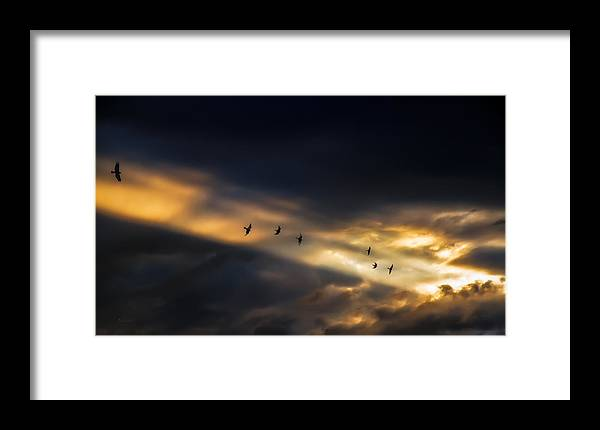 Birds Framed Print featuring the photograph Seven Bird Vision by Bob Orsillo