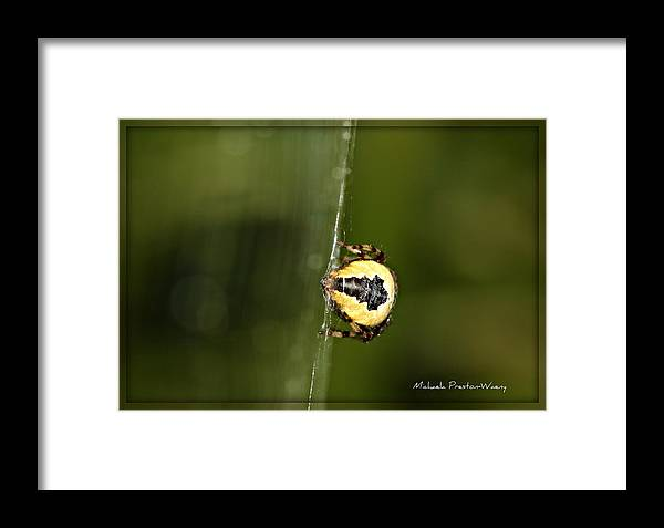 Nature Framed Print featuring the photograph Sexy by Michaela Preston