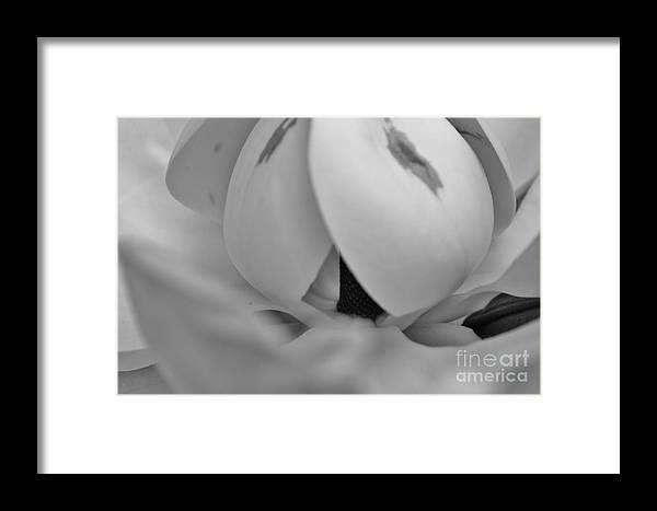 Kerisart Framed Print featuring the photograph Shades Of Grey Magnolia's by Keri West
