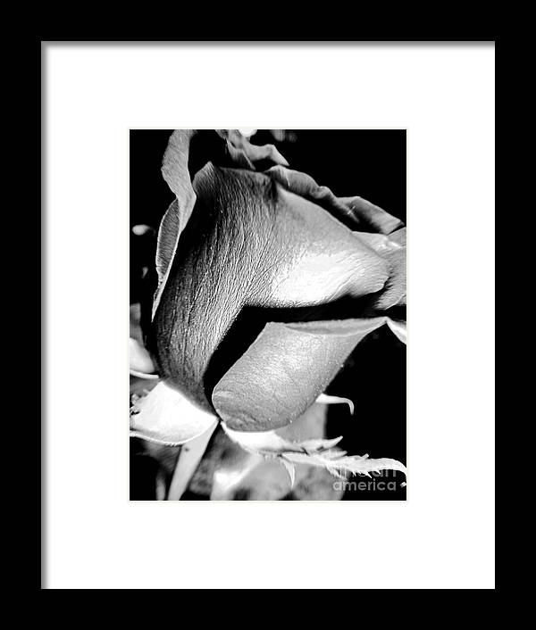 Shade Framed Print featuring the photograph Shades Of Rose by Nina Ficur Feenan
