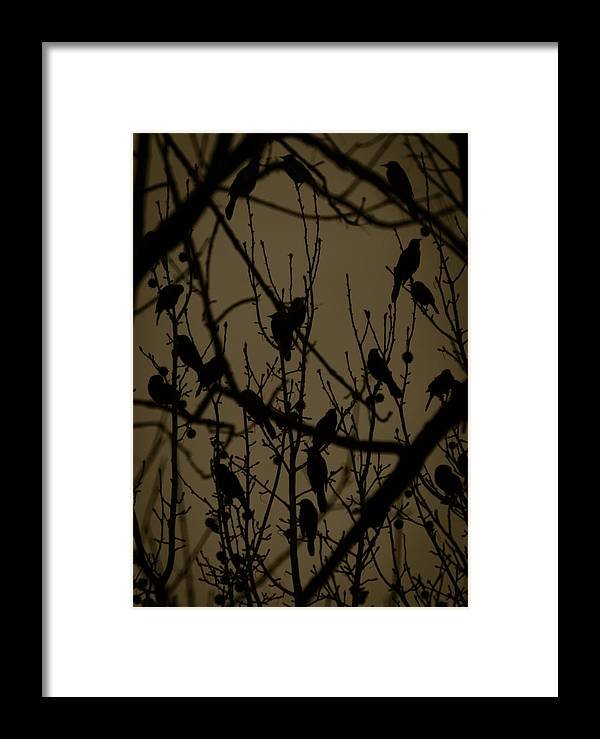 Birds Framed Print featuring the photograph Shadow Birds by Tracy B