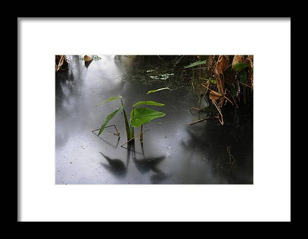 Swamp Framed Print featuring the photograph Shadow Mirror Reflection by Jody Lovejoy