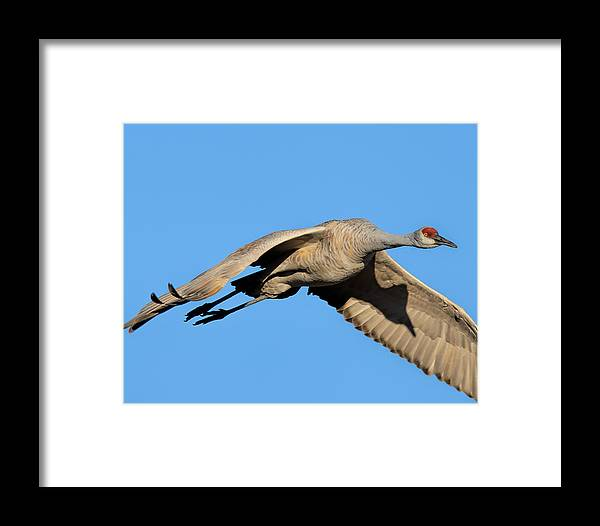 Birds Framed Print featuring the photograph Shadow On His Wing by Lonnie Wooten