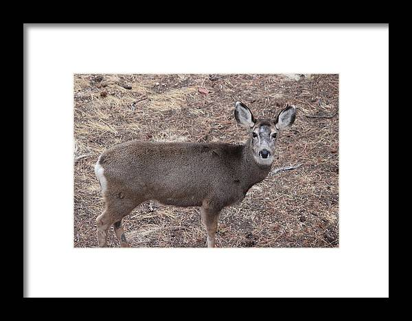Mule Deer Framed Print featuring the photograph Shadow by Peggy Beck