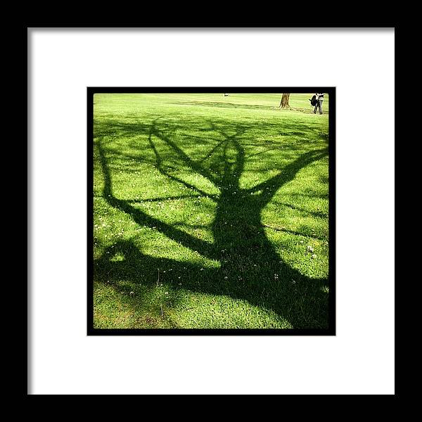 Nature Framed Print featuring the photograph Shadow Tree by Peter DiFrancesco