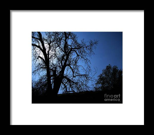 Nature Framed Print featuring the photograph Shadowlands 1 by Peter Awax