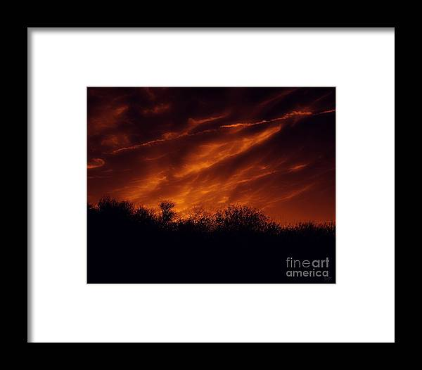 Nature Framed Print featuring the photograph Shadowlands 7 by Peter Awax