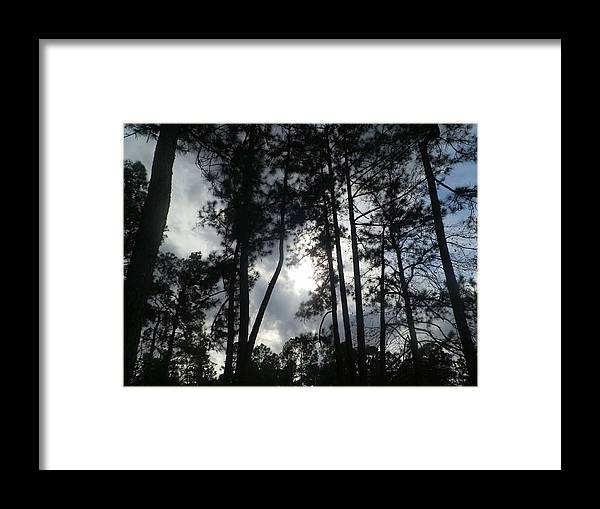 Forest Framed Print featuring the painting Shadows by Ione Hedges