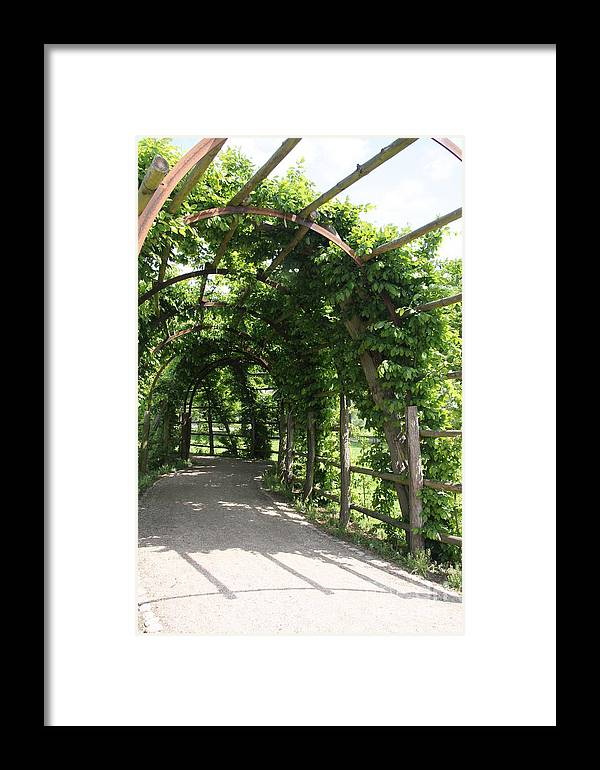 Trellis Framed Print featuring the photograph Shady Way by Christiane Schulze Art And Photography