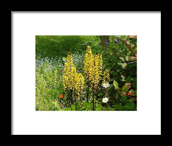 Flower Framed Print featuring the photograph Shafts Of Yellow by Lew Davis