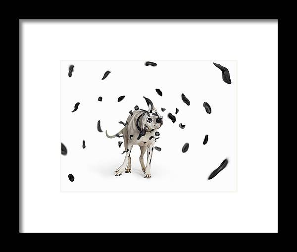 Pets Framed Print featuring the photograph Shake The Spots Off by Gandee Vasan