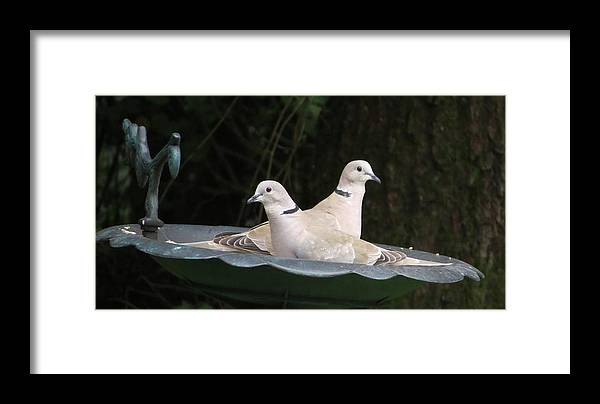 Nature Framed Print featuring the photograph Sharing by B Vesseur