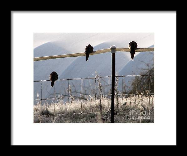 Bird Framed Print featuring the photograph Sharing The Morning News by Rory Sagner