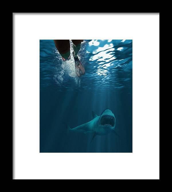 Underwater Framed Print featuring the photograph Shark Attack by MediaProduction