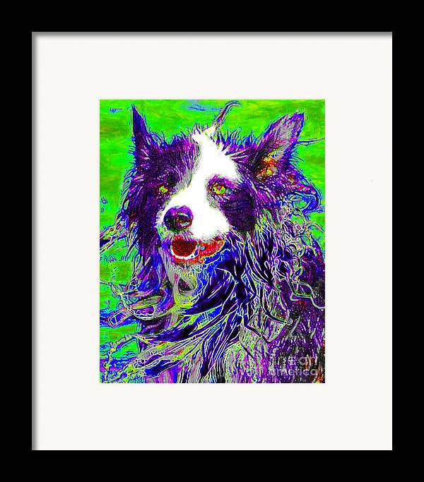 Animal Framed Print featuring the photograph Sheep Dog 20130125v4 by Wingsdomain Art and Photography