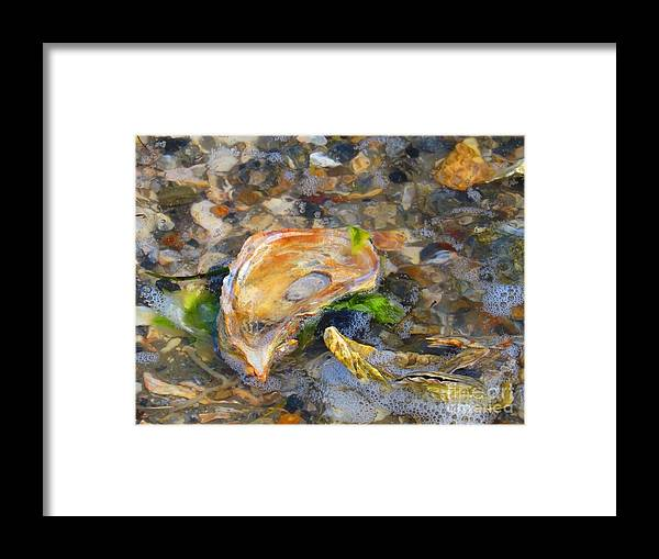 Shell Framed Print featuring the photograph Shell abstract by Rrrose Pix
