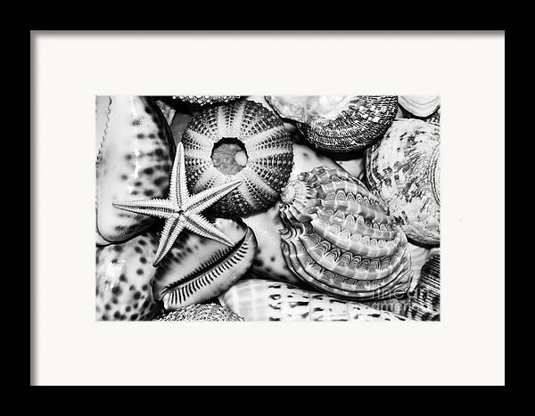 Photography Framed Print featuring the photograph Shellscape In Monochrome by Kaye Menner