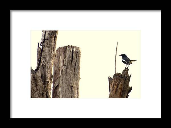 Nature Framed Print featuring the photograph Shelter by Ashwani Jain